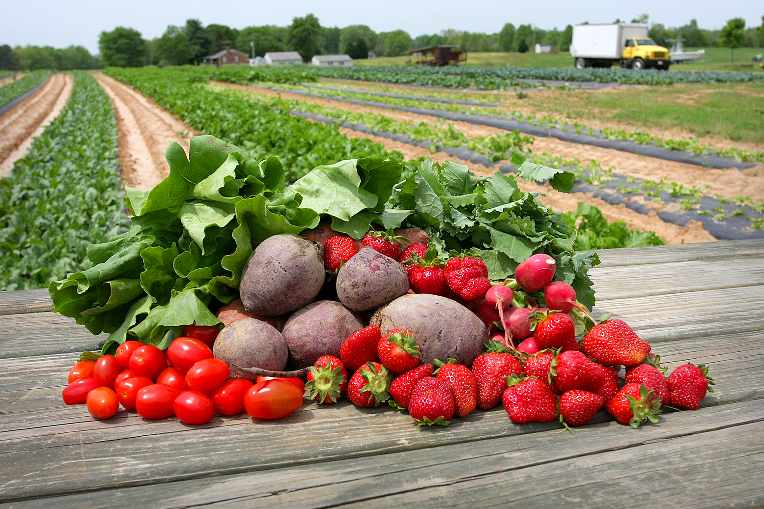 Fruits and veggies on top of a table overlooking a farm